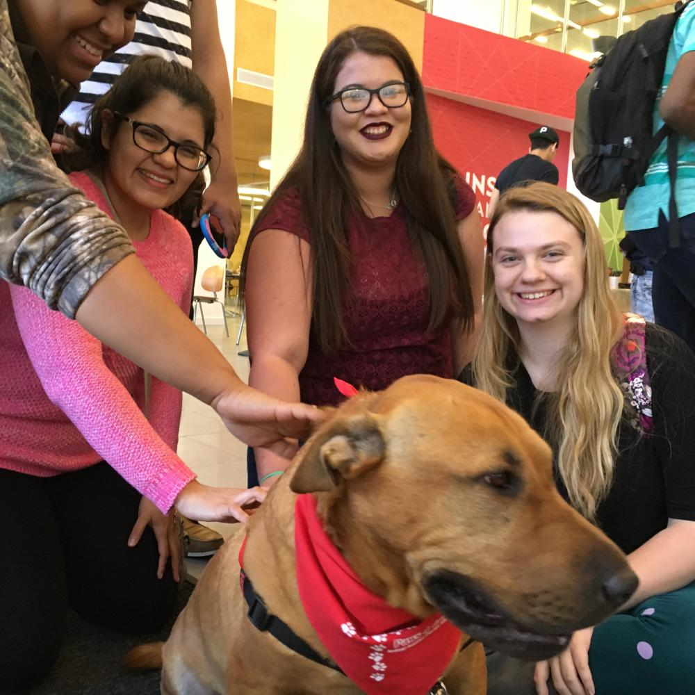 Students relaxed with Mr. Wrinkles last January as part of Campus Rec's Pet-A-Puppy event.