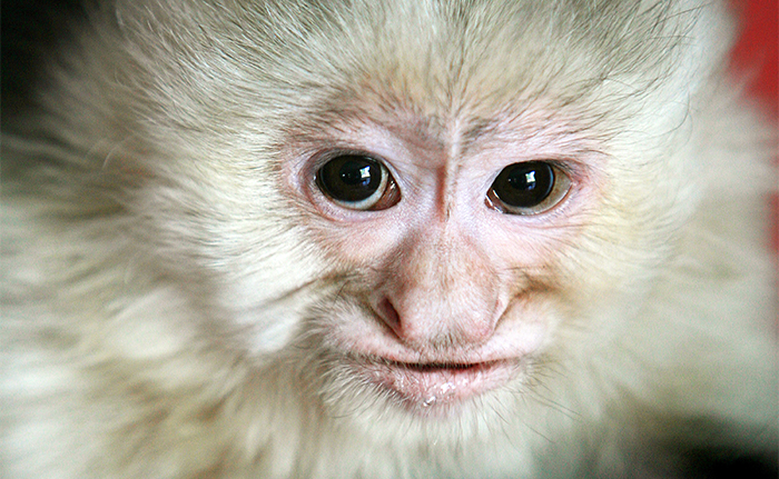 Capuchin+monkeys%2C+courtesy+of+Mrs.+Monkeys+Emporium%2C+will+be+part+of+a+wide+range+of+activities+aimed+at+raising+environmental+awareness+April+20+on+the+South+Campus.