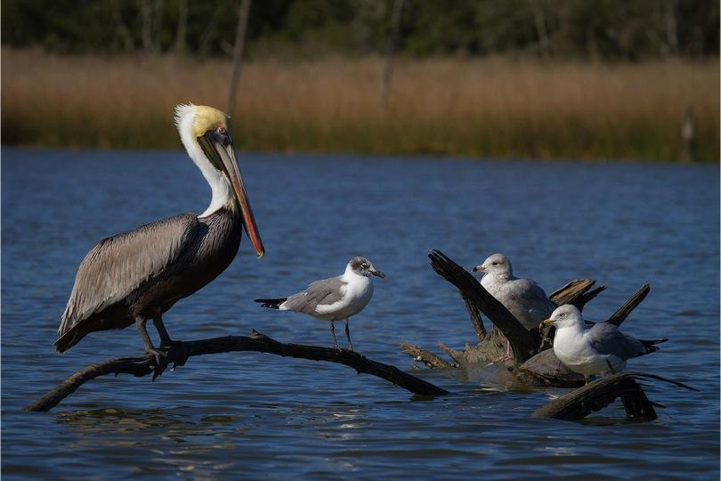 Armand Bayou Nature Center offers students scenic views of wildlife along the protected waters of its preservation center.