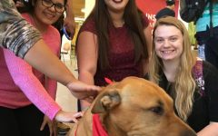 Central Rec Sports Brings In Therapy Dogs to Soothe End-of-Semester Stress
